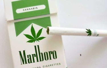 Phillip Morris Marijuana Cigarettes