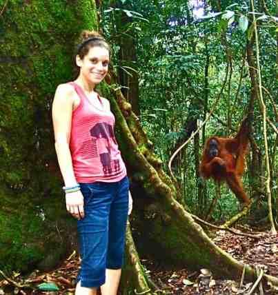 Orangoutangs on Sumatra
