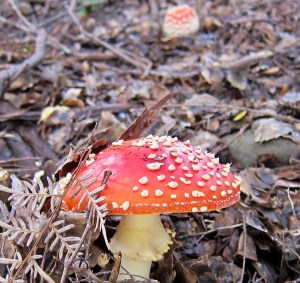 Even the mushrooms are pretty here