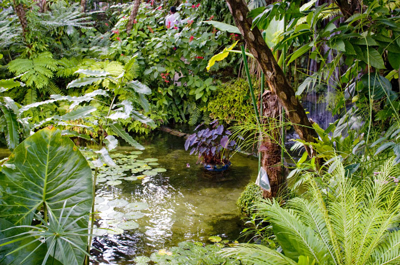 Tropical Water Plants