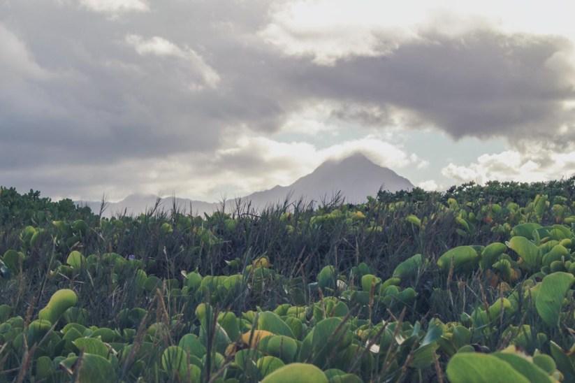 12-11-28-oahu-hawaii-5434.jpg
