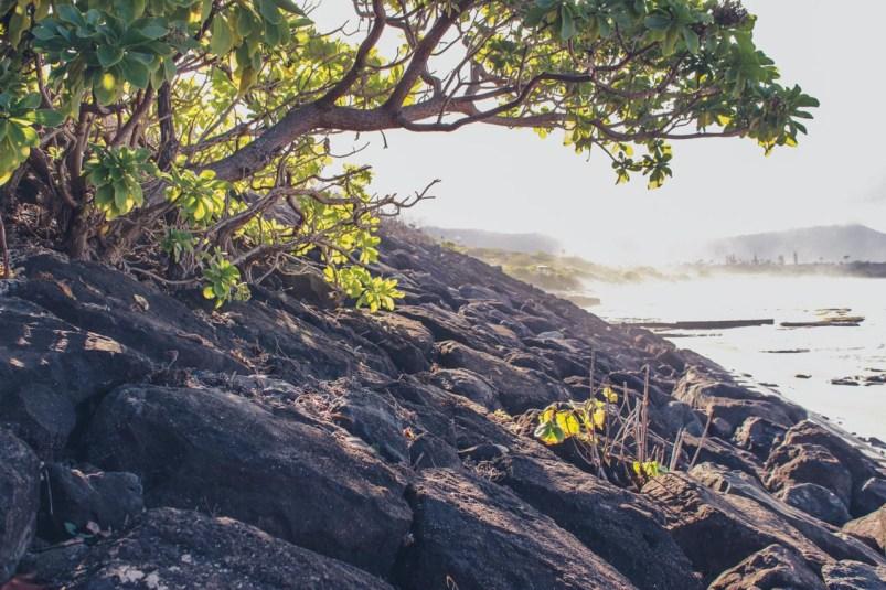 12-11-28-oahu-hawaii-5451.jpg