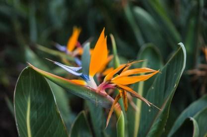 12-11-29-oahu-hawaii-00104.jpg