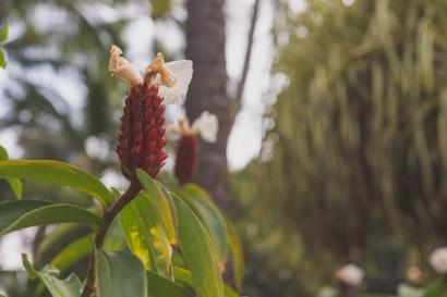 12-11-29-oahu-hawaii-00157.jpg
