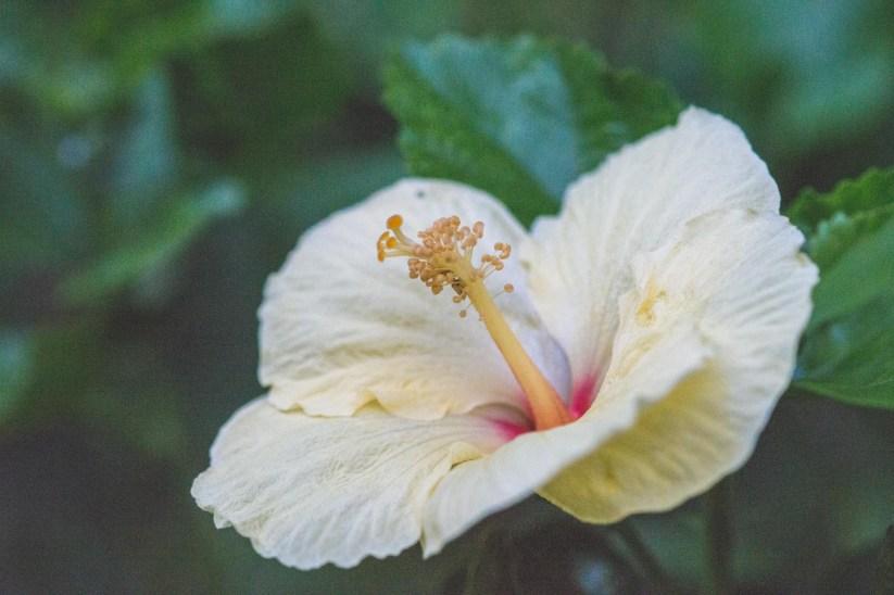 12-11-30-oahu-hawaii-00266.jpg