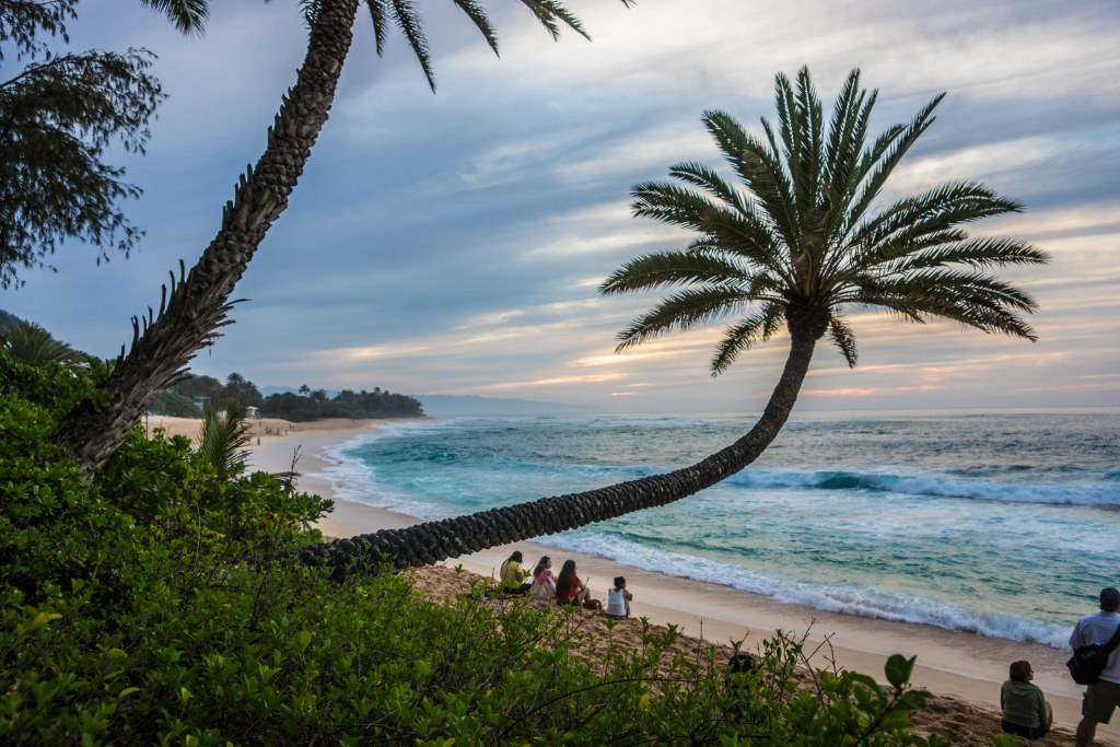 The Crooked Palm at Sunset Beach Oahu Hawaii