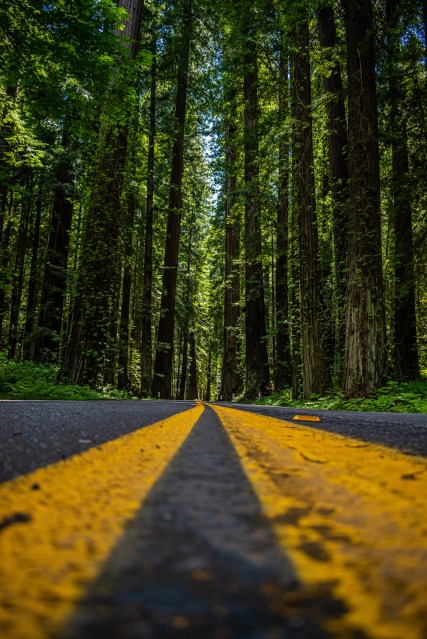 Image of a road on the Avenue of the Giants the Redwoods National Park, home to the tallest trees in the world