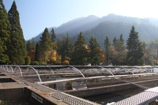 Salmon hatchery