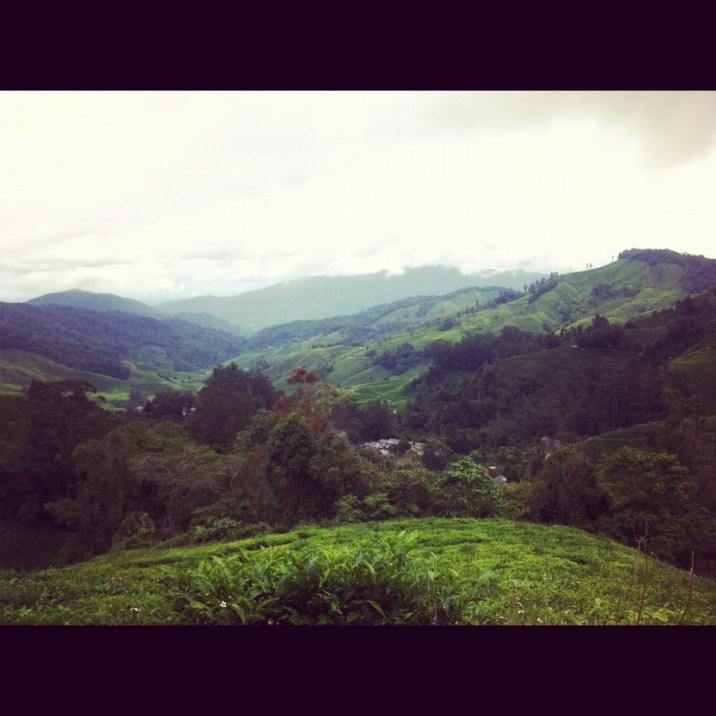 inne herbaciane wzgórza