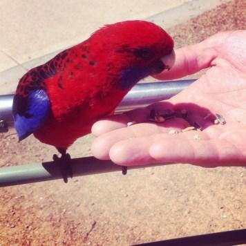 i mały papug