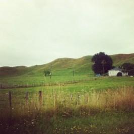 zielona, wiejscka NZ