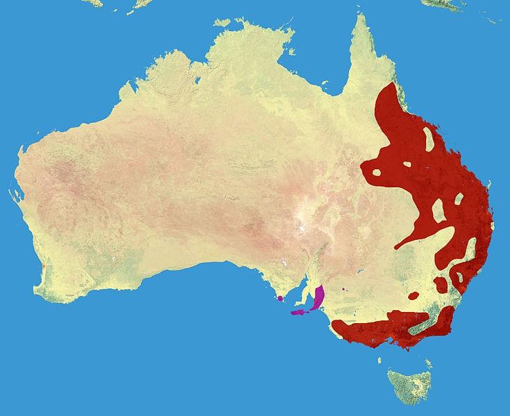 gdzie żyją koale