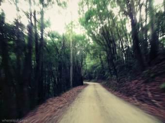 lasy w Australii