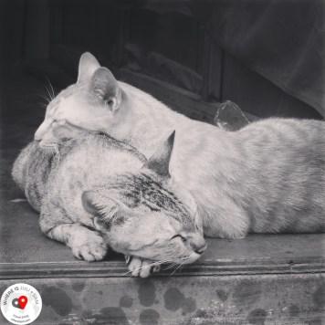 koty w Tajlandii