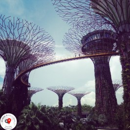 futurystyczne Supertrees