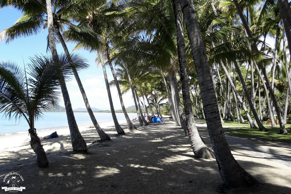 Palmowa droga