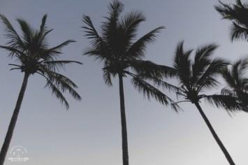 Palmy Hamilton Island