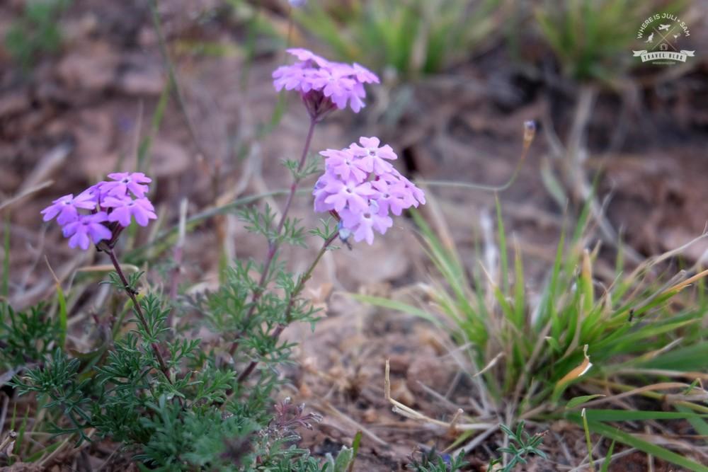 kwiaty pustynie