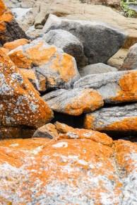 Tasmania pomarańczowe skały