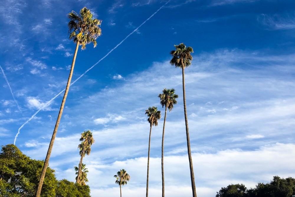 Trasa San Francisco Los Angeles palmy