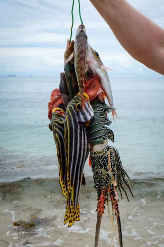 Ryby Fidzi