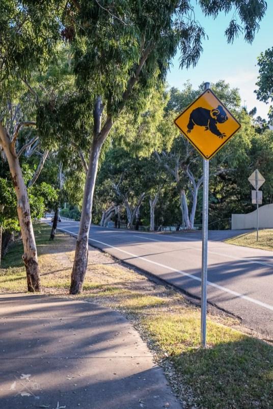 Magnetic-island-znak-koala