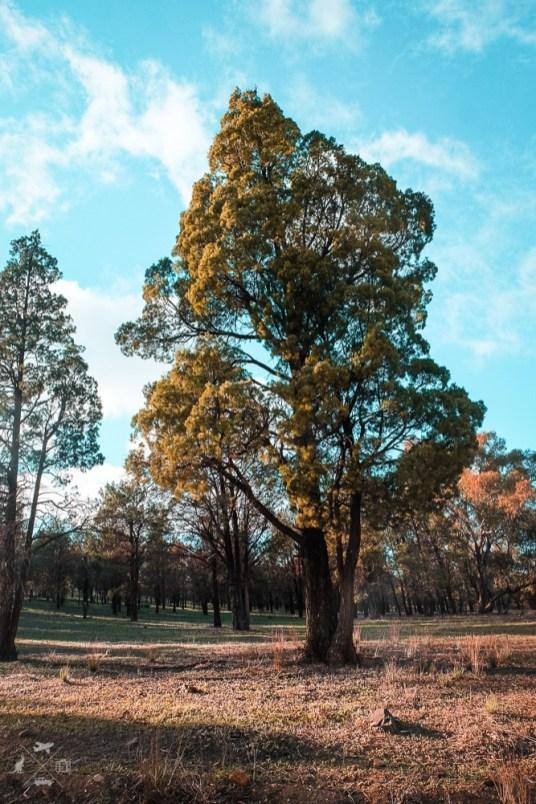 Sosna-Flinders-Ranges