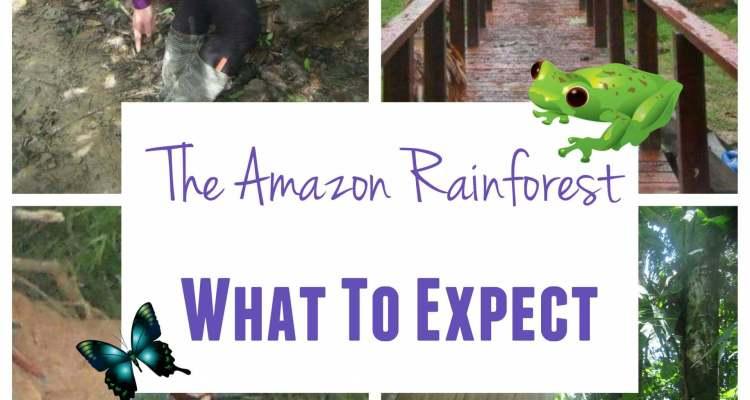 the Amazon rainforest trip where is tara irish travel blog