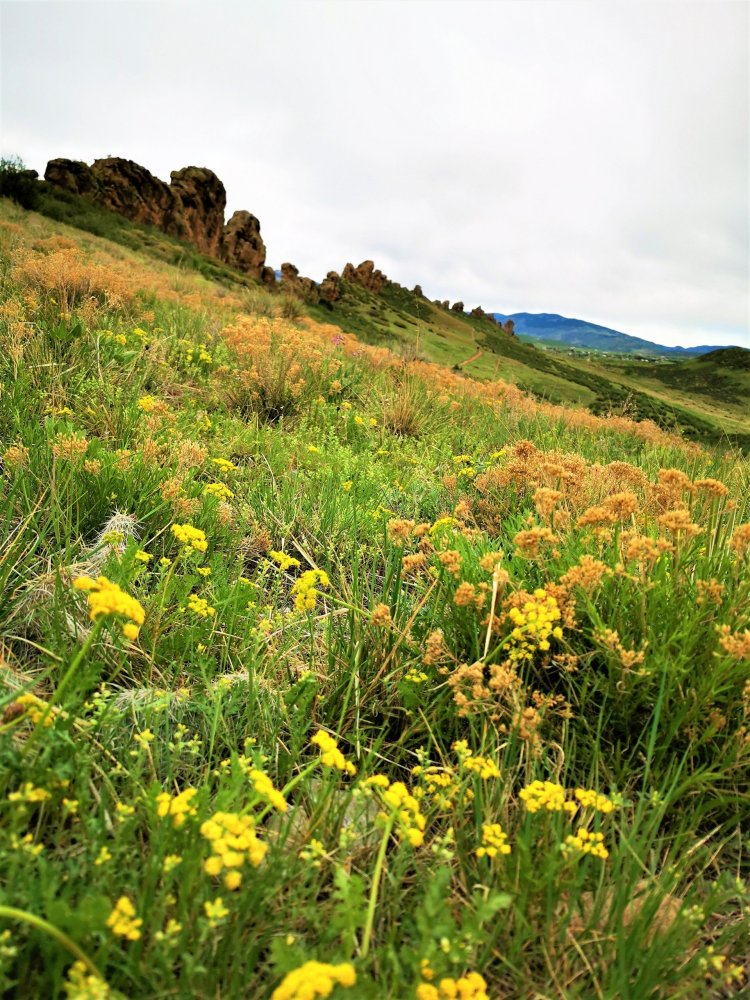 Devil's backbone hike Loveland Colorado wildflowers