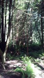 Jackson Forest