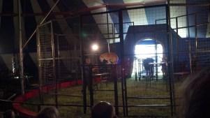 Cat Show at the Culpepper & Merriweather Circus