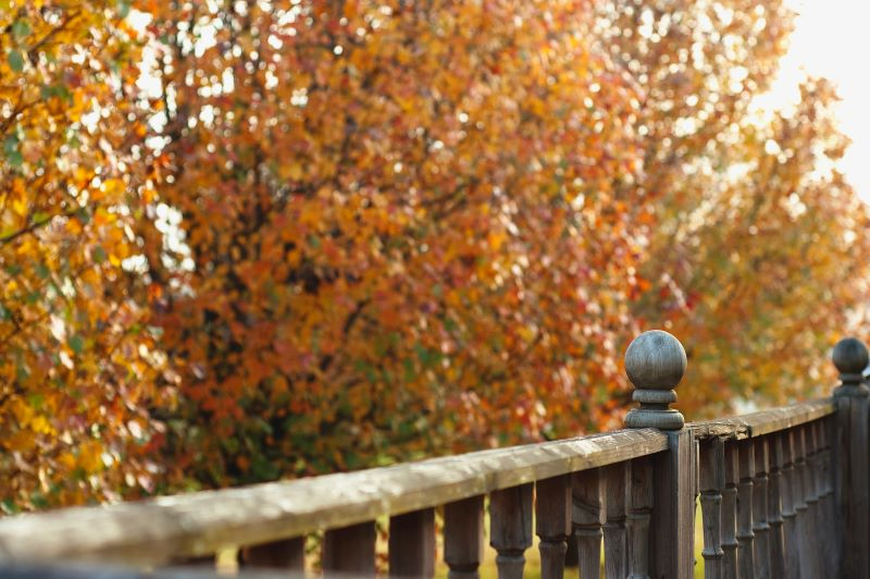 Vibrant yellow trees along a wooden fence. Best places to see fall colors in Kentucky.