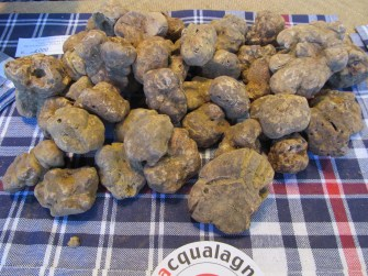 Winter white truffle