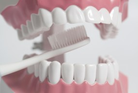 teeth-human-model-white-toothb