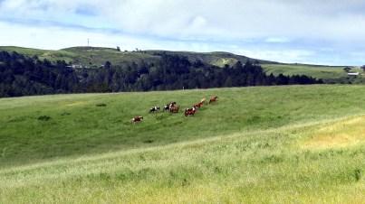 deer haven ranch horses-08 BY CHARLEBOIS