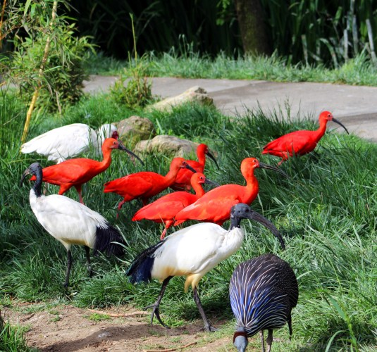 safari west aviary-03 BY CHARLEBOIS