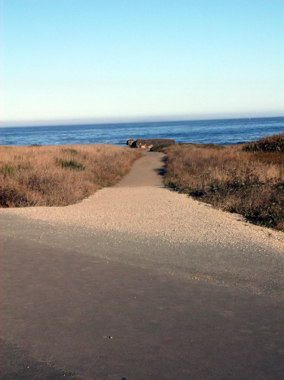 Trail to the edge. Noyo Headlands Park, Fort Bragg, CA Photographer: Mary Charlebois