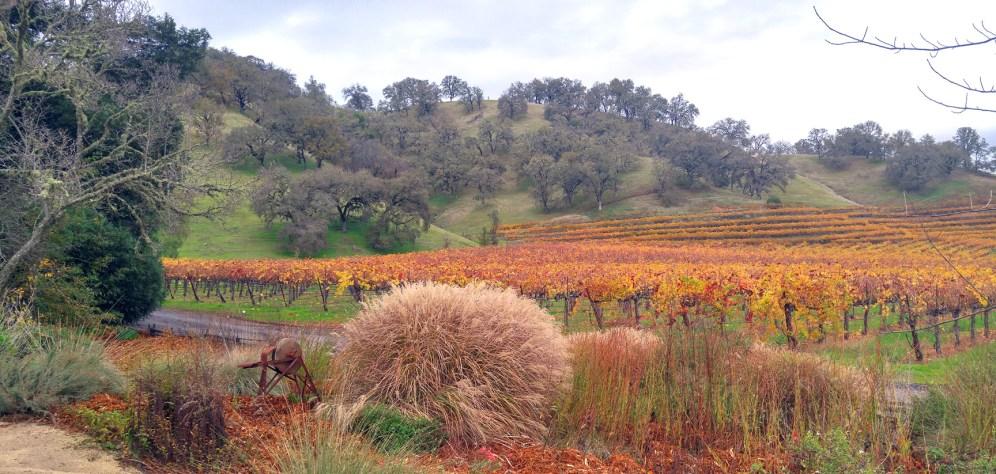 nelson-vineyard-01-med-by-charlebois