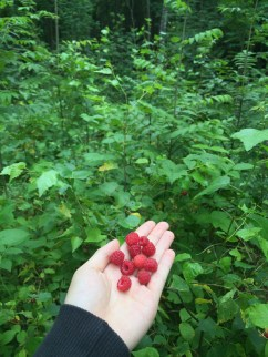 All-you-can-eat raspberries in your backyard