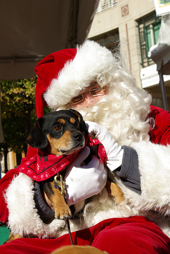 Santa Paws at Home 4 the Holidays in Reston Town Center