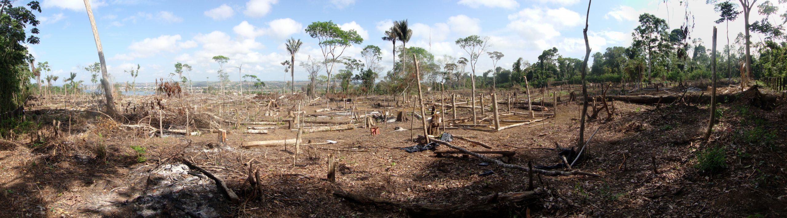 10 Essential Quotes from Querida Amazonia