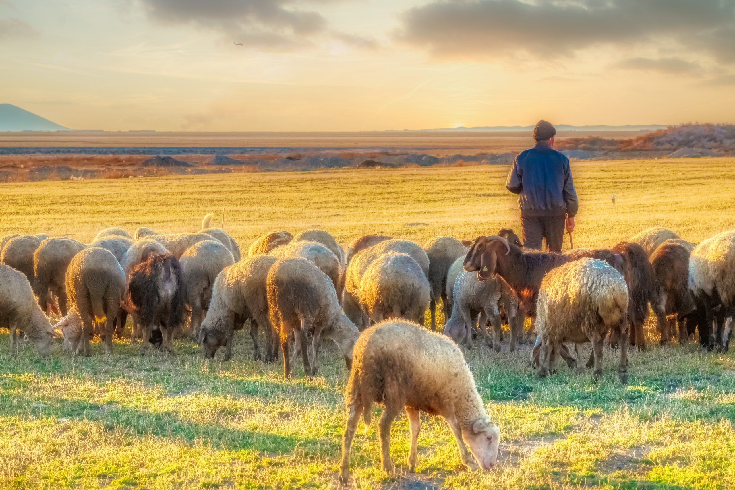 """Feed my sheep"": A power ordered to service"