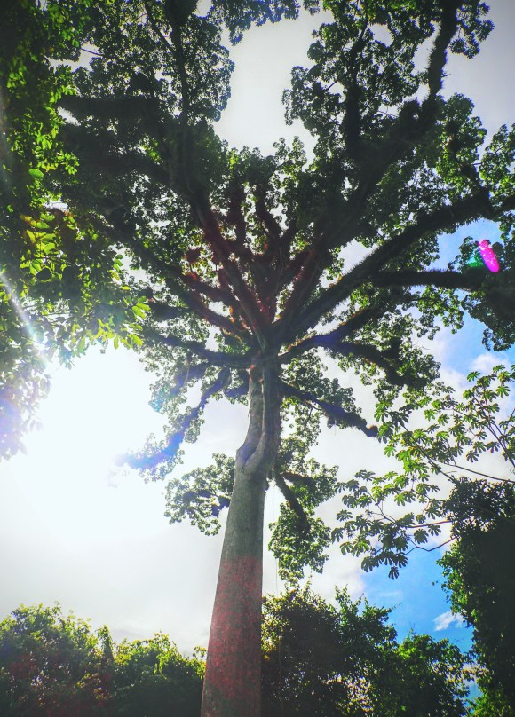 Huge beautiful tree on the way in.