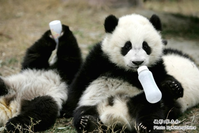 Photo source: www.panda.org.cn
