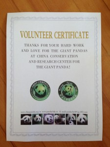 volunteer at a panda reserve