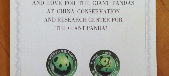 Volunteer at a Panda Reserve in China