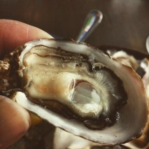 Local oyster from Taylor's.