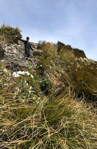 Frolicking in the tussock.
