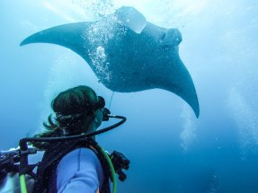 Diving with Manta Rays, Nusa Lembongan Indonesia | Where's Mollie? A Travel and Adventure Lifestyle Blog