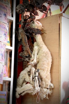 la paz bolivia witches market 4